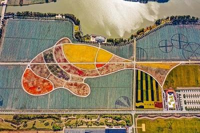 Fish-shaped-rice-fields-in-Nanhu.jpg